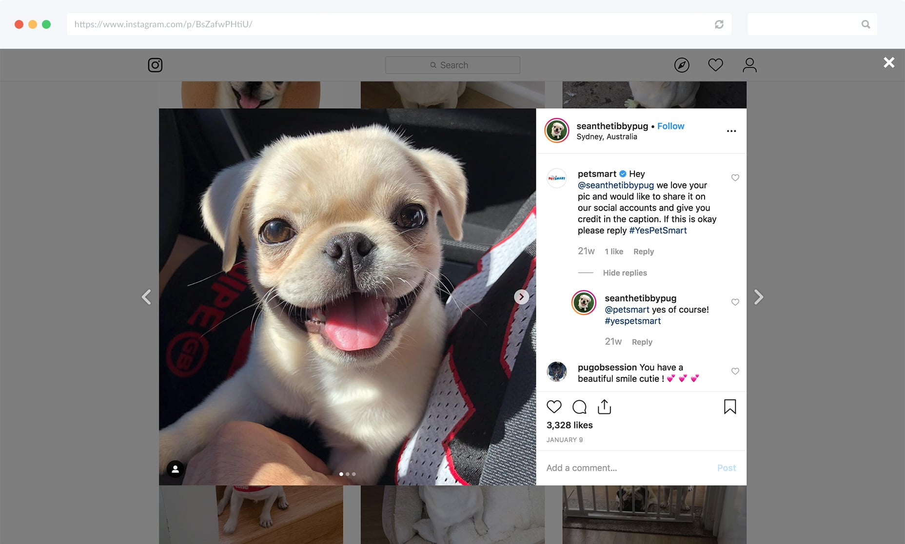 PetSmart uses hashtags to get permission to use UGC